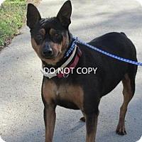 Adopt A Pet :: Rocko - Rocky Mount, NC