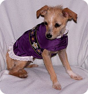 Terrier (Unknown Type, Small) Mix Dog for adoption in San Angelo, Texas - Mindy