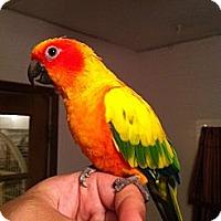 Adopt A Pet :: Lynie - Punta Gorda, FL