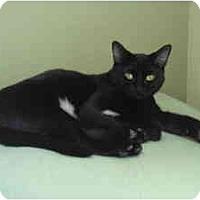 Adopt A Pet :: Mini - Davis, CA