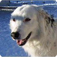 Adopt A Pet :: Casper - Glenrock, WY