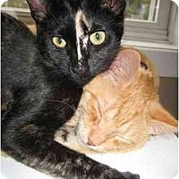 Adopt A Pet :: Lula (& Sailor) - *video* - Portland, OR