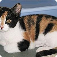 Adopt A Pet :: Kiki - Riverhead, NY
