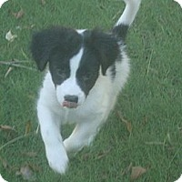 Adopt A Pet :: ciabatta - Phoenix, AZ