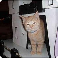 Adopt A Pet :: Screech - Hamburg, NY
