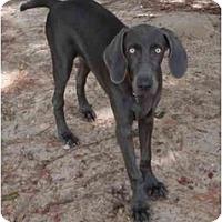 Adopt A Pet :: Skynard  **ADOPTED** - Eustis, FL
