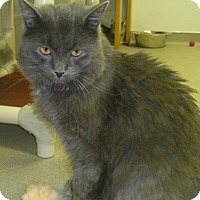 Adopt A Pet :: Mr. Smokey - Hamburg, NY