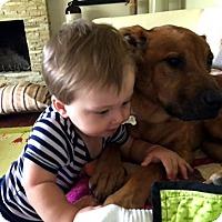 Adopt A Pet :: Boxer - Irvine, CA