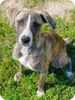 Shepherd (Unknown Type) Dog for adoption in Memphis, Tennessee - Moogey