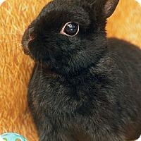 Adopt A Pet :: Ramona - Santa Barbara, CA