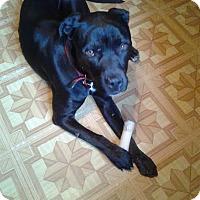 Adopt A Pet :: Bubba - ADOPTION PENDING - Livonia, MI