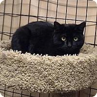 Adopt A Pet :: Mila - Massapequa, NY