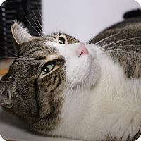 Adopt A Pet :: Colby - Middletown, CT