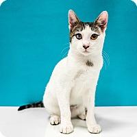 Adopt A Pet :: Fiona - Chandler, AZ