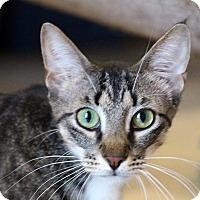 Adopt A Pet :: Zarrah - Sarasota, FL