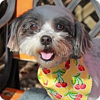 Adopt A Pet :: Merry-PENDING - Garfield Heights, OH