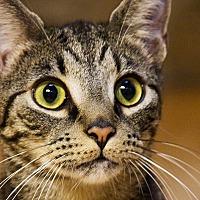 Adopt A Pet :: Pumbaa - Durham, NC