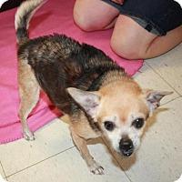 Adopt A Pet :: Kaboodle - Cottageville, WV