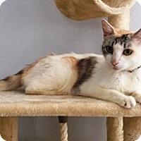 Adopt A Pet :: Jasmine - Orange, CA
