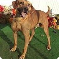 Adopt A Pet :: Rex-LOCAL - Lebanon, ME