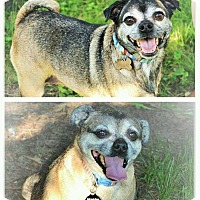 Adopt A Pet :: Candy & Sandy a BONDED PAIR! - Eastpointe, MI