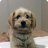 Terrier (Unknown Type, Medium) Dog for adoption in Pomona, California - I1263114