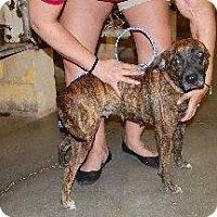 Adopt A Pet :: Ally - Laingsburg, MI