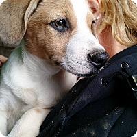 Adopt A Pet :: Cynda - Macomb, IL