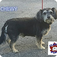 Adopt A Pet :: CHEWY - Strattanville, PA