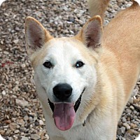Husky Mix Dog for adoption in Waco, Texas - Alaska