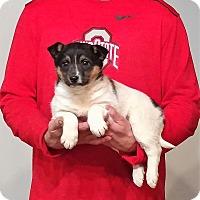 Adopt A Pet :: Gracie - New Philadelphia, OH