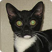 Adopt A Pet :: FELIX-2012 - Hamilton, NJ