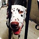 Adopt A Pet :: Lady Godiva