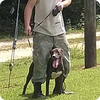 Adopt A Pet :: Janice Joplin - Allentown, PA