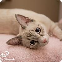 Adopt A Pet :: Aranea - Fountain Hills, AZ