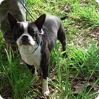 Adopt A Pet :: Teddy Romo - various cities, FL