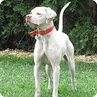 Adopt A Pet :: Dalton-Illinois - Wood Dale, IL