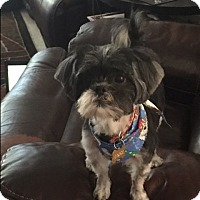 Adopt A Pet :: Sassy - Playa Del Rey, CA