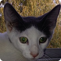 Adopt A Pet :: Larry Hagman - Trevose, PA