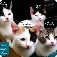 Adopt A Pet :: Kelly - Overland Park, KS