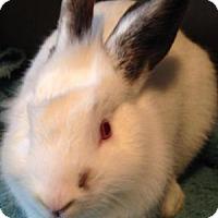 Adopt A Pet :: Abracadabra - Conshohocken, PA