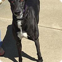 Adopt A Pet :: Shawnee - Walnut Creek, CA