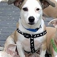 Adopt A Pet :: Ernest - Grafton, WI