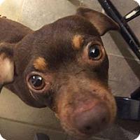 Adopt A Pet :: Patron - Mooresville, NC