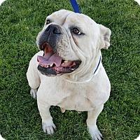 Adopt A Pet :: Coco - Modesto, CA