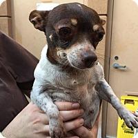 Adopt A Pet :: Cowbell - Westminster, CA