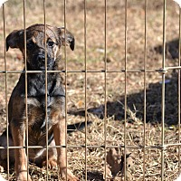 Adopt A Pet :: Skor - Pikeville, MD