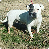 Adopt A Pet :: Dyson - Cannelton, IN