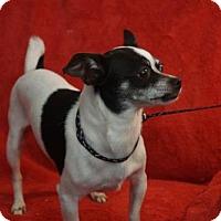 Adopt A Pet :: Li'l Bit - Martinez, GA