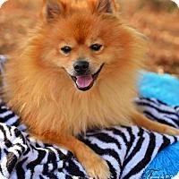 Adopt A Pet :: Luke - Fayetteville, GA